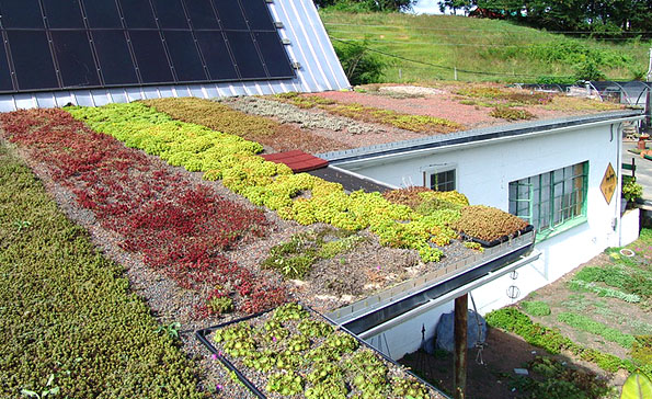 Nursery of Plants for Earth Roofs - Tropical Earth Roofs